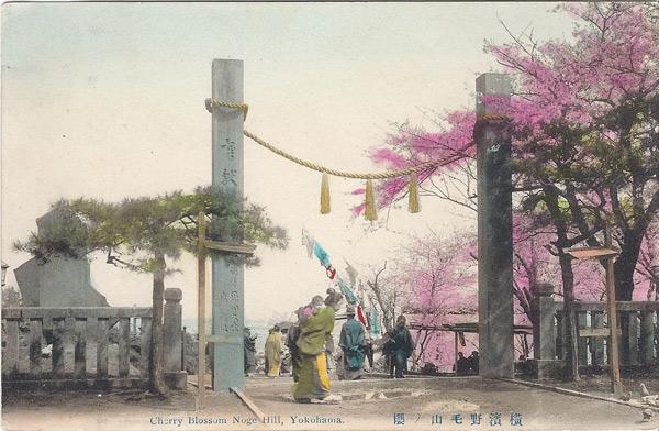 Cherry blossom Noge Hill Yokohama