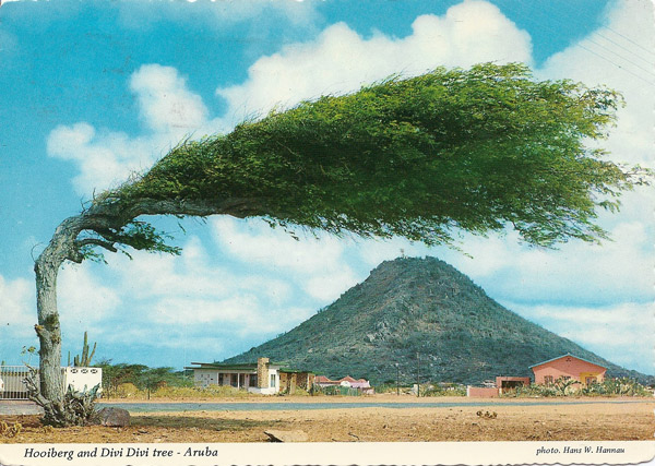 Hooiberg and Divi Divi Tree, Aruba, Netherlands
