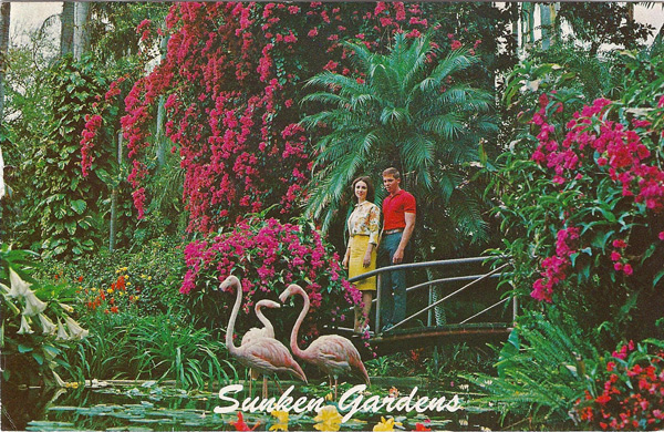 A young couple stroll leisurely through romantic SUNKEN GARDENS in St. Petersburg, Florida, completely enthralled with the peaceful and enchanting atmosphere.
